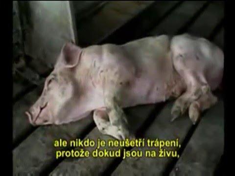 Pravda o mäse - dokument (titulky)