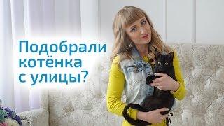 БЕЗДОМНЫЙ КОТЕНОК. Что делать, если подобрали котенка с улицы?