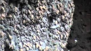Cueva de los Murcielagos en El Maviri, Topolobampo, Ahome, SIN.