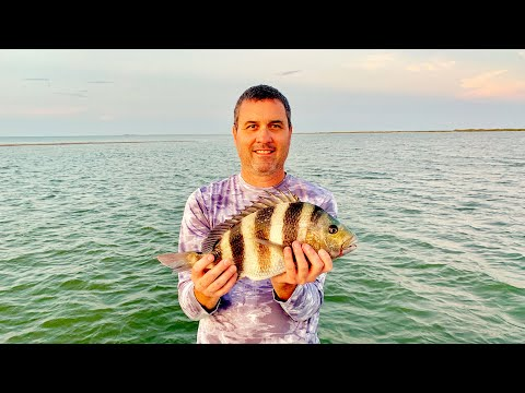 Texas Saltwater Fishing With Live Shrimp For A Sheepshead
