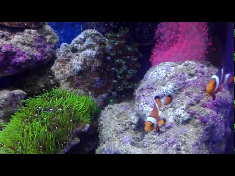 Dave Reef Tank 30 gallon July 2017 no sump