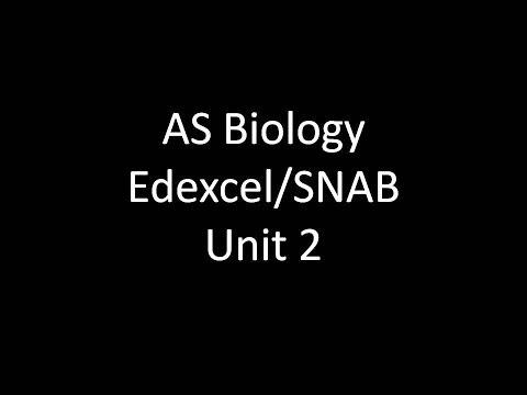 AS Level Biology- Edexcel/SNAB- Unit 2 Revision Notes