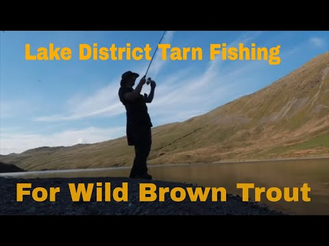 Lake District Fishing For Wild Brown Trout