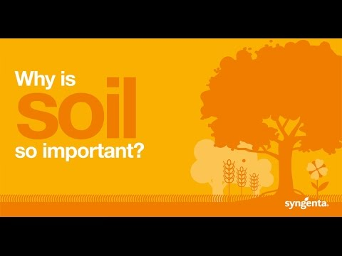 Why is soil so important?