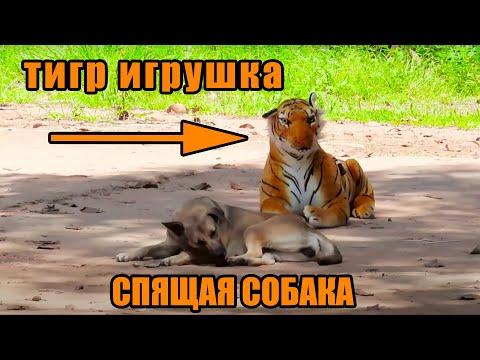 Тигр Игрушка Против Собак и людей смешно😂🤣