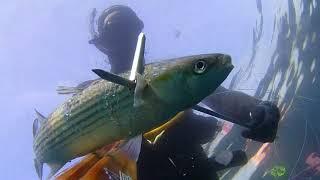 Pesca sub 12/11/17 da 0 a 26 metri