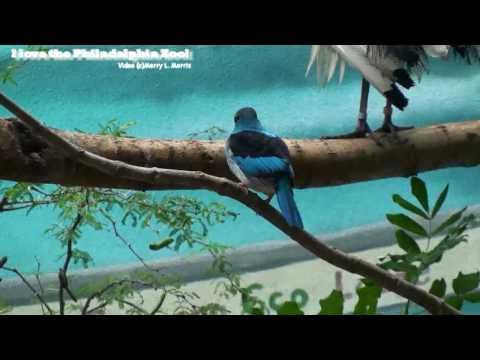 Philadelphia Zoo McNeil Avian Center - African Savanna Birds