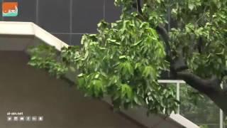 بالفيديو.. هونج كونج تلغى مئات الرحلات الجوية بسبب إعصار نيدا