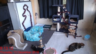 Kitten Inn Livestream - Sam's place