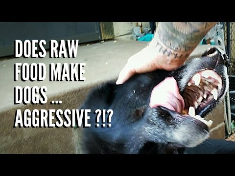 Does RAW Food Make Dogs Aggressive?!?