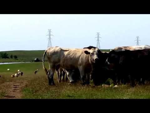 HydroGreen Hydroponic Livestock Feed