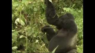 Atlas Safaris Uganda ( Italian)