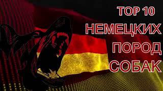 ТОП 10 СОБАК РОДОМ ИЗ ГЕРМАНИИ!немецкие породы собак