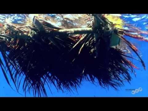 FAD's Niue 2011