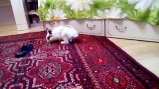 Что делать если кролик не ест