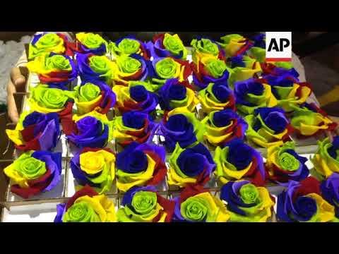 Preserved roses bring Valentine's Day sales jolt to Ecuador