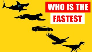 Speed Comparison: World's Fastest Animals