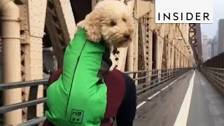Dog Backpack Is Perfect For Adventurous Doggos
