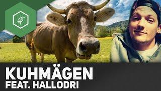 Warum hat die Kuh so viele Mägen?! - ft. Hallodri