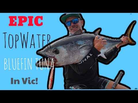 Victorian Topwater Bluefin Tuna