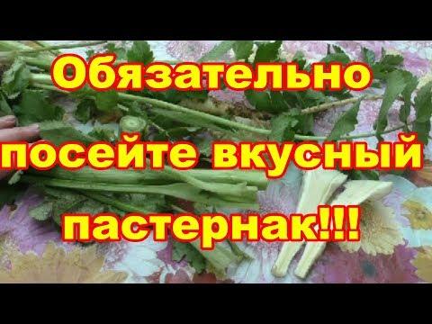 Вкуснейший корнеплод пастернак незаслуженно забыт!!!