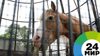 Хорошее отношение к лошадям: как россияне спасают животных от бойни - МИР 24