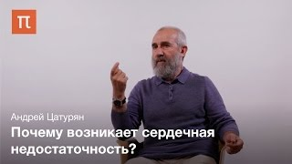 Сердце как насос — Андрей Цатурян