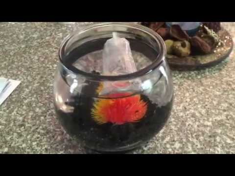 Don 39 t buy saltwater fish at petco doovi for How much are betta fish at petco