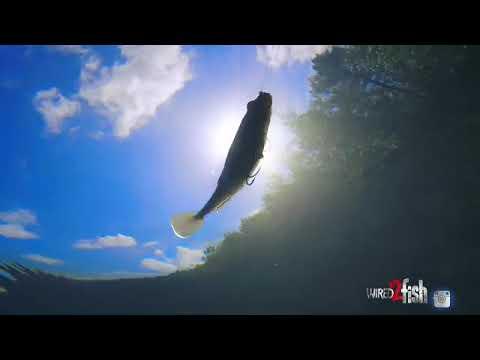 Big Paddle Tail Swimbait Breakdown For Big Bass
