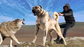 The 10 Best Livestock Guard Dog Breeds