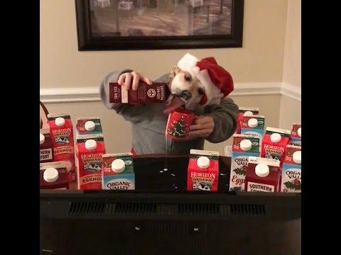 Christmas Gone Bad