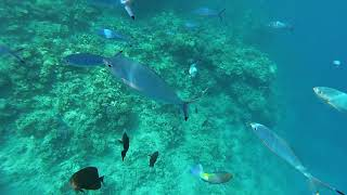 Egypt Snorkeling Sharm El Sheikh Red sea