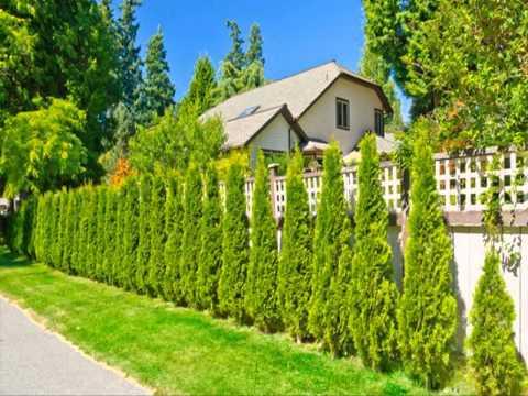ขาย ต้น โมก สําหรับ ทํา รั้ว ขายต้นไม้ ออนไลน์