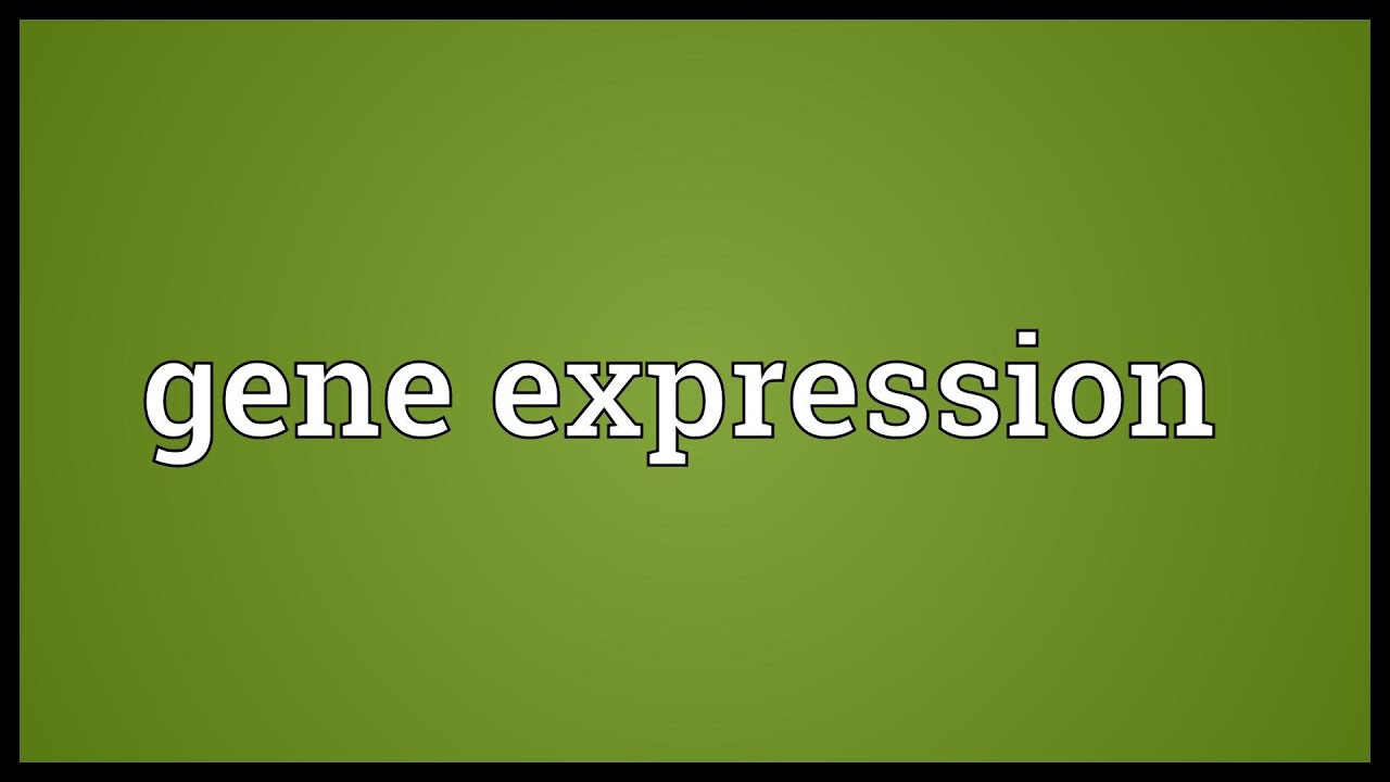 What is the meaning of the expression dead silence 66