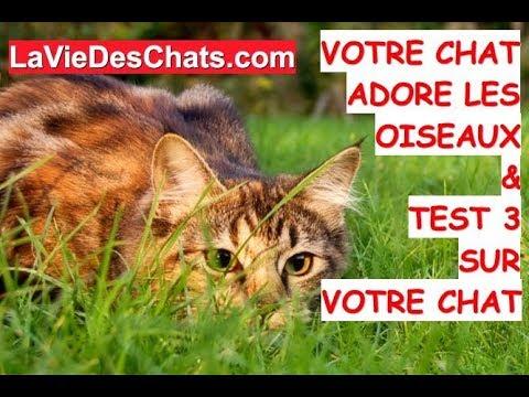Votre Chat 🐱 Adore Les Oiseaux & TEST 3 Sur Votre Chat