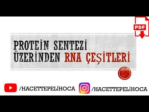 17 Protein Sentezinde mRNA, tRNA, rRNA Rolü RNA Çeşitleri TYT9Sınıf#hacettepelihoca