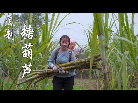 【山藥村老闆娘】甘蔗熟了,熬製一鍋新鮮的紅糖,做幾串糖葫蘆,小孩超喜歡