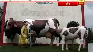 712 : बीड, कोल्हापूर : दूध दर कपातीमुळे शेतकरी आणि दूध संघ संतप्त