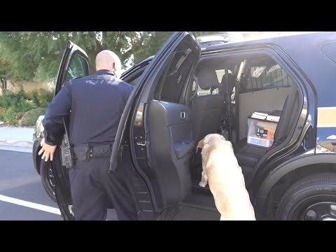 The Cops Arrested our Dog! 🐶🚨🚔