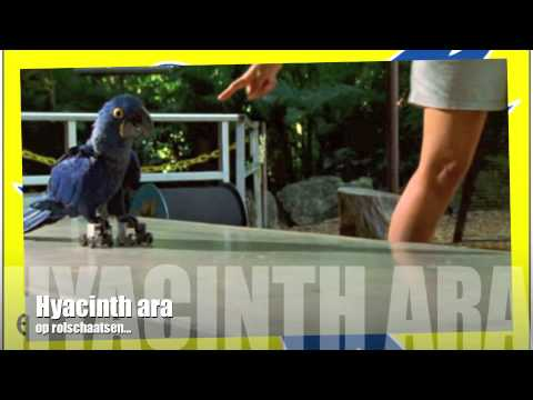 Download Macaw Breeders Podcast #13