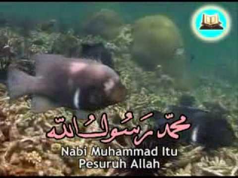 Sifat 20 Allah