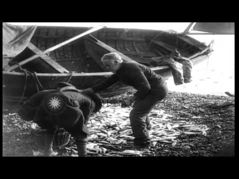 Old fishermen work short-handed at Sidmouth, England, during World War I HD Stock Footage