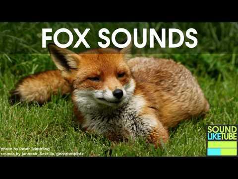FOX SOUND EFFECT