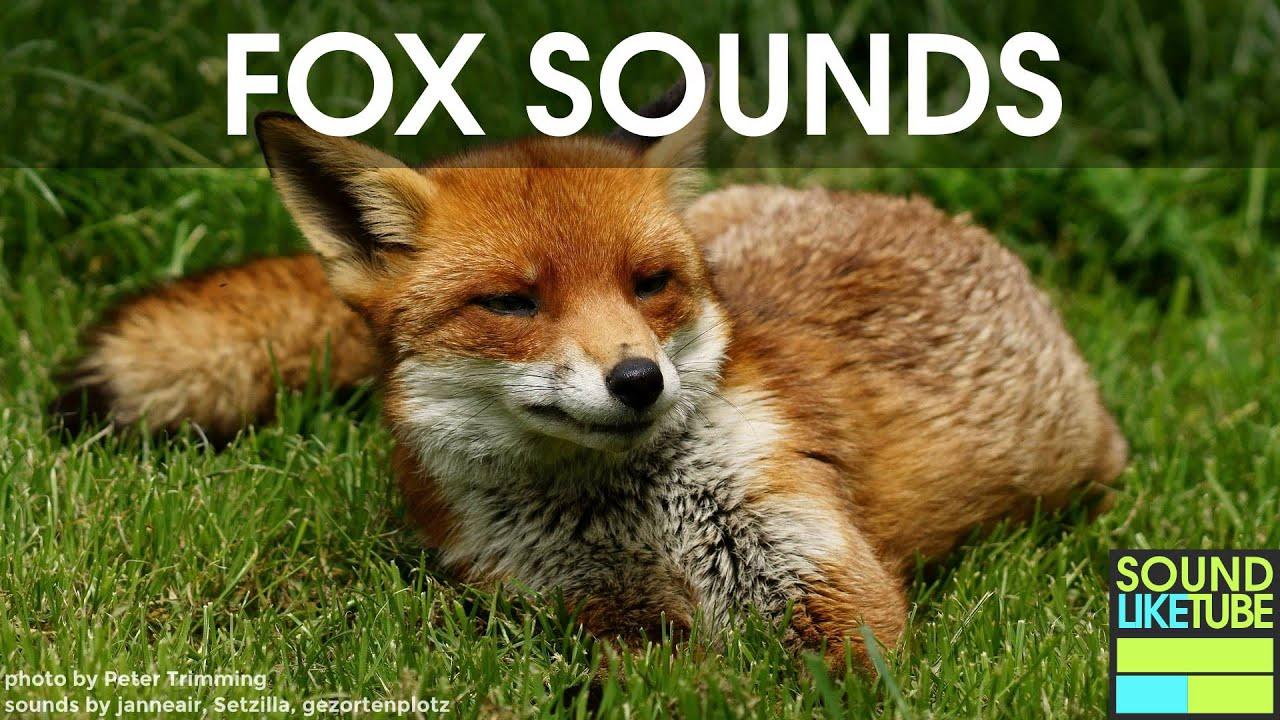 Fox Sound