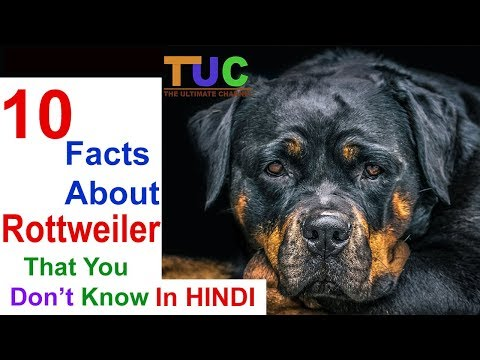 10 Rottweiler Facts That You Don't Know in HINDI  - DOGS IN HINDI - THE ULTIMATE CHANNEL