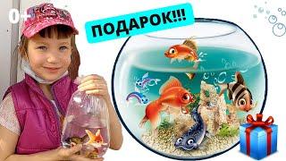 Подписывайтесь на канал - Что подарить ребенку? Аквариумные рыбки! Аквариум для начинающих.