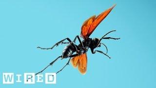 Absurd Creatures | Tarantula Hawk