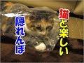 かわいい猫とおもしろ楽しく遊ぼう4ー猫と隠れんぼ
