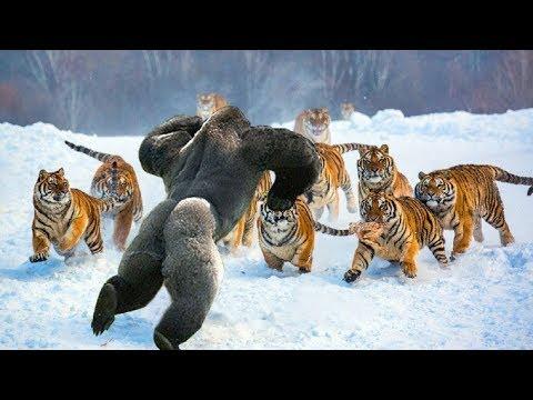 Самые Бесстрашные Животные