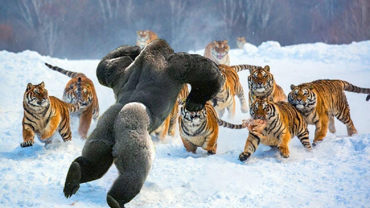 Самые Бесстрашные Животные на Земле